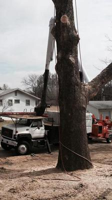 Tree Trimming Service Des Moines, Iowa